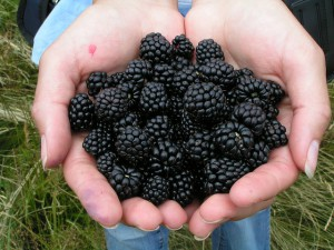A 4 legjobb fogyasztó hatású bogyós gyümölcs