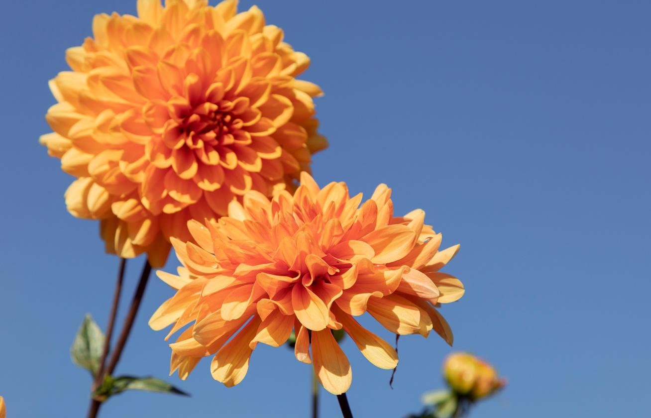 Aminosav taurin vásárolni Ukrajnában fogyni