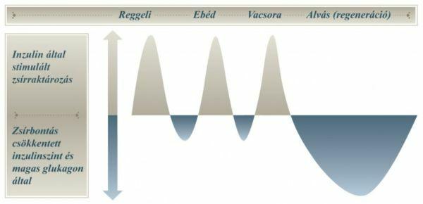 ideális súlycsökkentési fázis 3