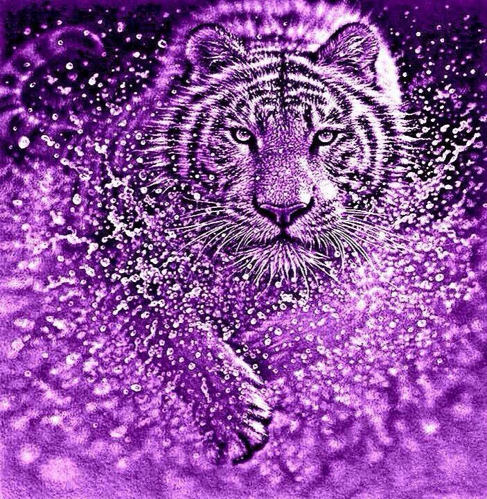 lila tigris zsírégető