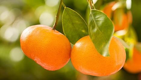 A mandarin hizlal?