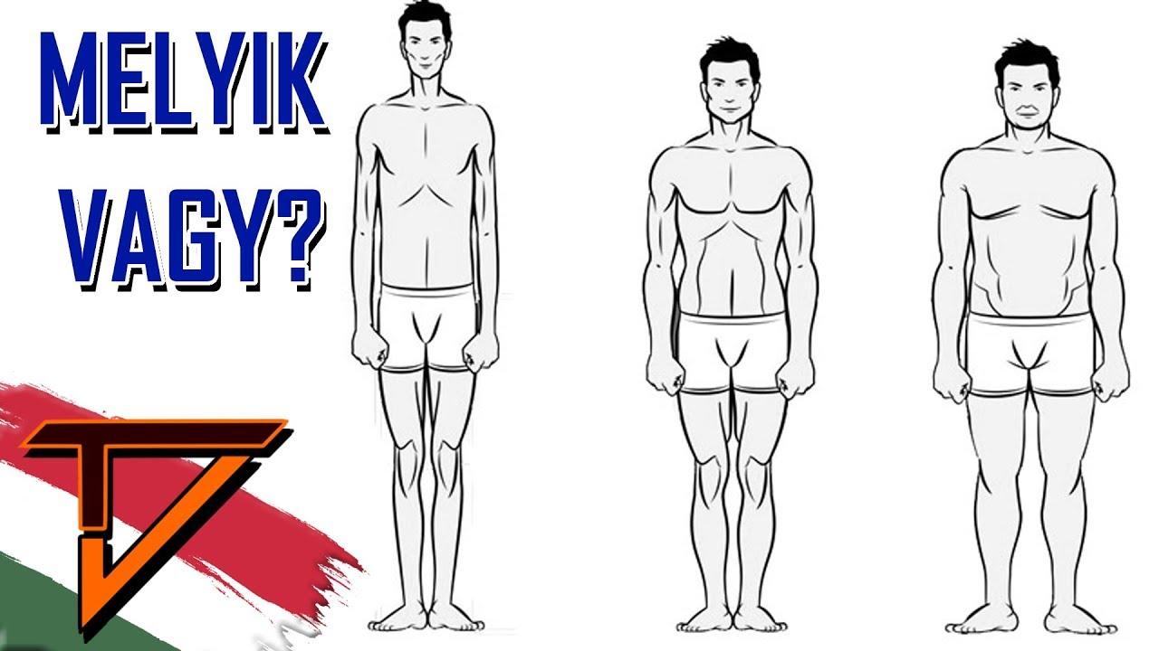 Testalkat típusok