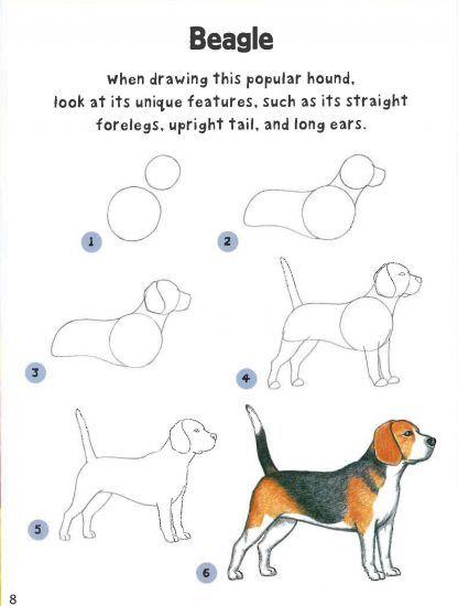 beagle fogyás tippeket